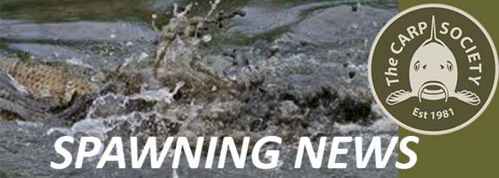 SPAWNING NEWS - HORSESHOE LAKE