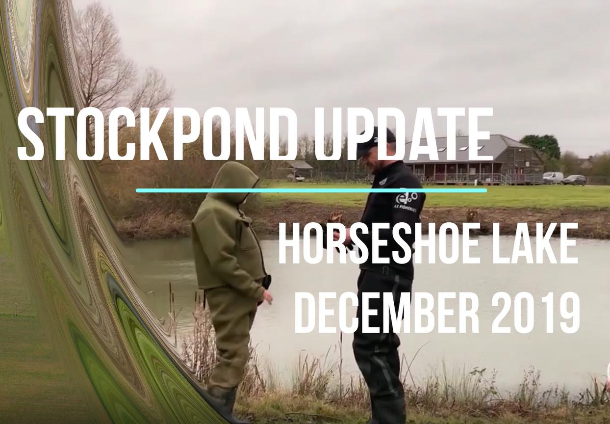 Stock pond update - December 2019